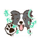 ボーダーコリー/おでか犬(個別スタンプ:16)