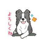 ボーダーコリー/おでか犬(個別スタンプ:21)
