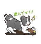 ボーダーコリー/おでか犬(個別スタンプ:23)