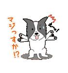 ボーダーコリー/おでか犬(個別スタンプ:25)