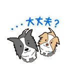 ボーダーコリー/おでか犬(個別スタンプ:26)