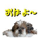 シーズー犬の可愛いスタンプ☆(個別スタンプ:02)