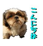 シーズー犬の可愛いスタンプ☆(個別スタンプ:03)