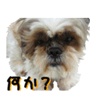 シーズー犬の可愛いスタンプ☆(個別スタンプ:06)