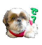 シーズー犬の可愛いスタンプ☆(個別スタンプ:09)