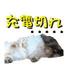 シーズー犬の可愛いスタンプ☆(個別スタンプ:10)