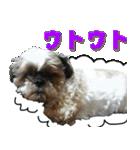 シーズー犬の可愛いスタンプ☆(個別スタンプ:11)