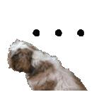 シーズー犬の可愛いスタンプ☆(個別スタンプ:16)
