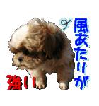 シーズー犬の可愛いスタンプ☆(個別スタンプ:17)