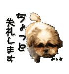 シーズー犬の可愛いスタンプ☆(個別スタンプ:19)