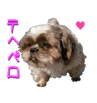 シーズー犬の可愛いスタンプ☆(個別スタンプ:20)