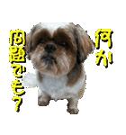 シーズー犬の可愛いスタンプ☆(個別スタンプ:25)