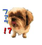 シーズー犬の可愛いスタンプ☆(個別スタンプ:26)