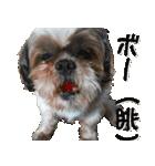 シーズー犬の可愛いスタンプ☆(個別スタンプ:27)