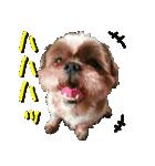 シーズー犬の可愛いスタンプ☆(個別スタンプ:28)