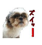 シーズー犬の可愛いスタンプ☆(個別スタンプ:30)