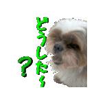 シーズー犬の可愛いスタンプ☆(個別スタンプ:34)