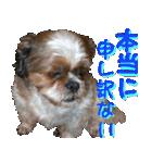 シーズー犬の可愛いスタンプ☆(個別スタンプ:38)