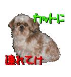 シーズー犬の可愛いスタンプ☆(個別スタンプ:39)