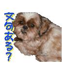 シーズー犬の可愛いスタンプ☆(個別スタンプ:40)