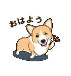 気軽にスタンプ コーギー 行動編(個別スタンプ:02)