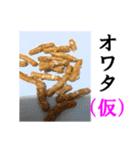 【実写】かりんとう(仮)(個別スタンプ:40)