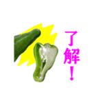【実写】ピーマン(個別スタンプ:04)