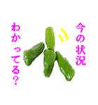 【実写】ピーマン(個別スタンプ:12)