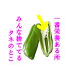 【実写】ピーマン(個別スタンプ:16)