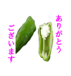 【実写】ピーマン(個別スタンプ:26)