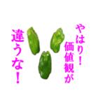 【実写】ピーマン(個別スタンプ:32)