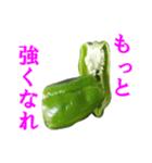 【実写】ピーマン(個別スタンプ:36)
