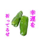 【実写】ピーマン(個別スタンプ:40)
