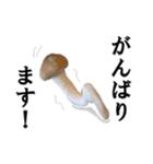 【実写】しめじ(個別スタンプ:04)