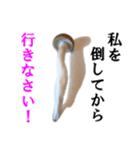 【実写】しめじ(個別スタンプ:07)