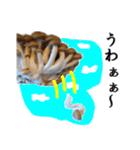 【実写】しめじ(個別スタンプ:13)