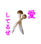 【実写】しめじ(個別スタンプ:14)