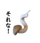 【実写】しめじ(個別スタンプ:18)