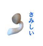 【実写】しめじ(個別スタンプ:19)
