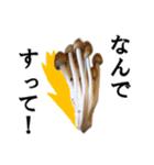 【実写】しめじ(個別スタンプ:21)