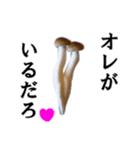 【実写】しめじ(個別スタンプ:30)