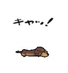激しく尻尾をふるイヌ4(個別スタンプ:03)