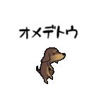 激しく尻尾をふるイヌ4(個別スタンプ:13)