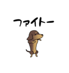 激しく尻尾をふるイヌ4(個別スタンプ:22)
