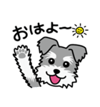 Cute! シュナウザースタンプ(個別スタンプ:01)