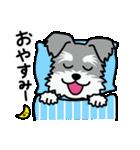 Cute! シュナウザースタンプ(個別スタンプ:07)