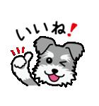 Cute! シュナウザースタンプ(個別スタンプ:08)