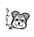Cute! シュナウザースタンプ(個別スタンプ:09)