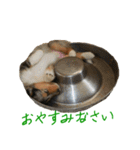 rough collies love 1(個別スタンプ:04)