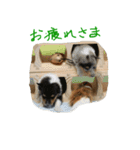 rough collies love 1(個別スタンプ:09)
